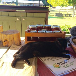 On the back porch, a sleepy cat keeps guard over the farm's fresh local honey for sale to customers. The honey is gathered from the farm's own honeybees, then jarred and set out for purchase. Homemade granola, cereal bars, cashew date bars and baked goods made by Anna, the youngest of the Hammond children, are also a popular back porch purchase for farm-goers. The back porch of the farm is self-served but customers are welcome to ring the bell for assistance.  Photo by Brittany Maher